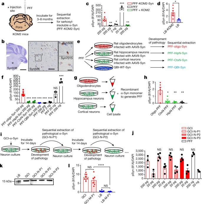 Cellular milieu imparts distinct pathological α-synuclein