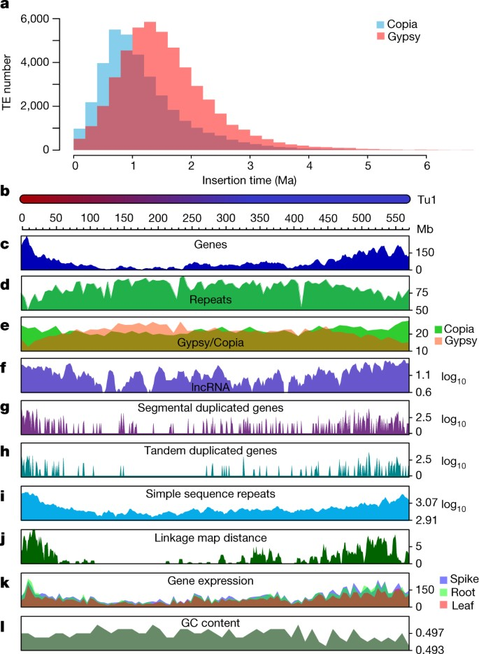 Genome sequence of the progenitor of wheat A subgenome