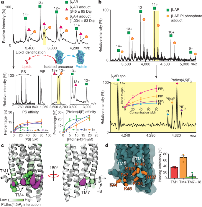 PtdIns(4,5)P 2 stabilizes active states of GPCRs and