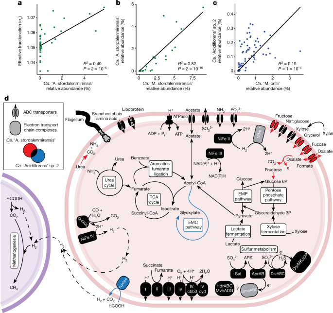 Genome-centric view of carbon processing in thawing permafrost | Nature