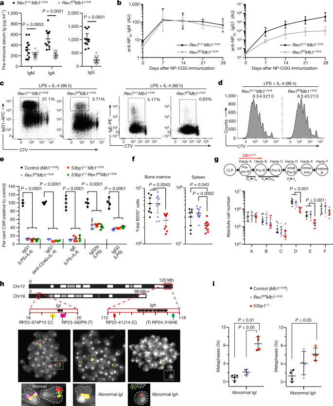 53BP1 cooperation with the REV7–shieldin complex underpins DNA