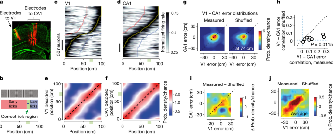 Coherent encoding of subjective spatial position in visual