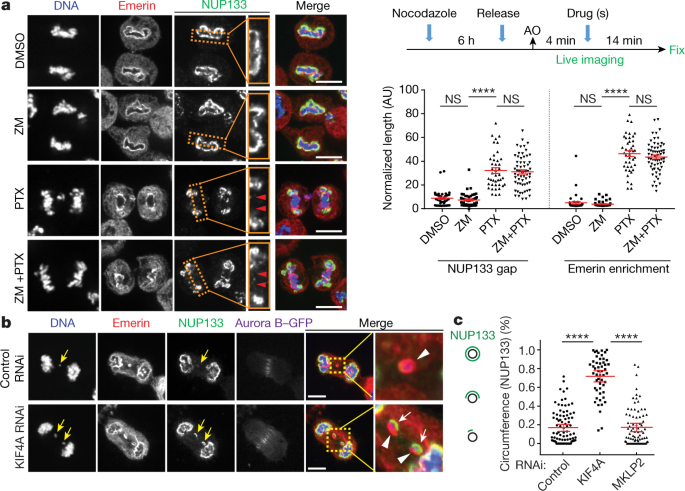 Nuclear envelope assembly defects link mitotic errors to