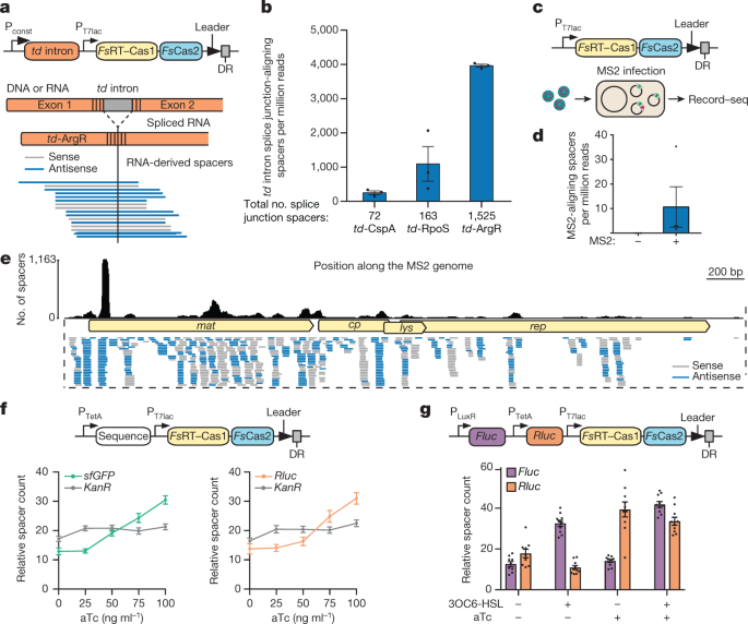 Transcriptional recording by CRISPR spacer acquisition from