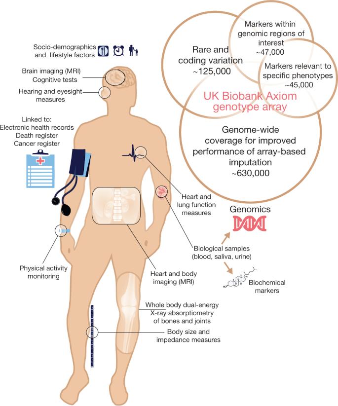 The UK Biobank resource with deep phenotyping and genomic data | Nature