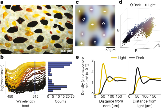 Elucidating the control and development of skin patterning in