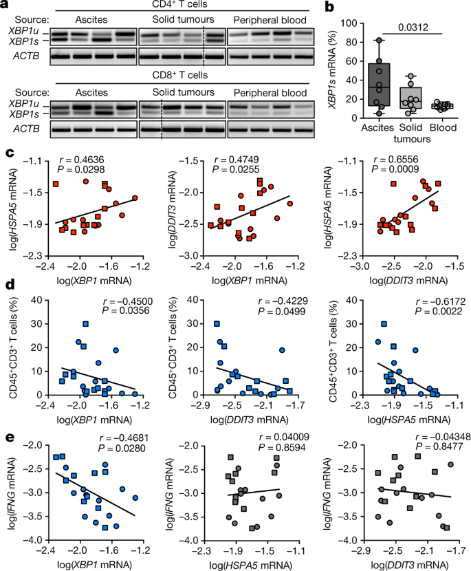IRE1α–XBP1 controls T cell function in ovarian cancer by