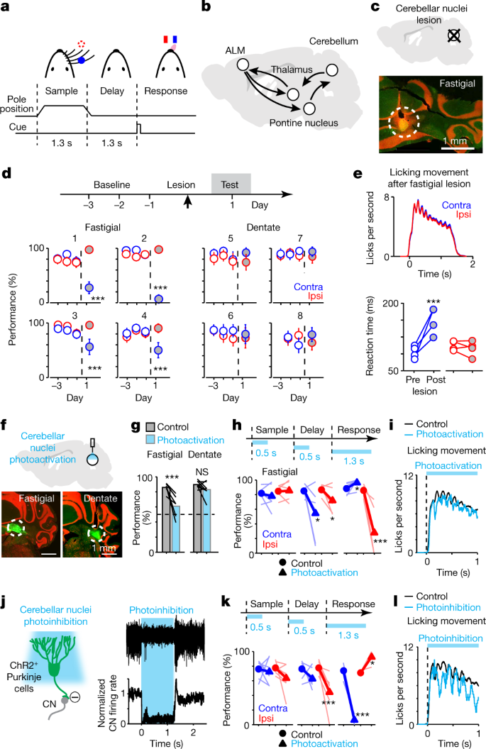 A cortico-cerebellar loop for motor planning | Nature