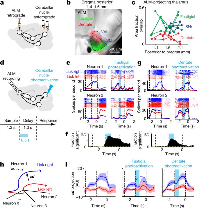 A cortico-cerebellar loop for motor planning | Nature