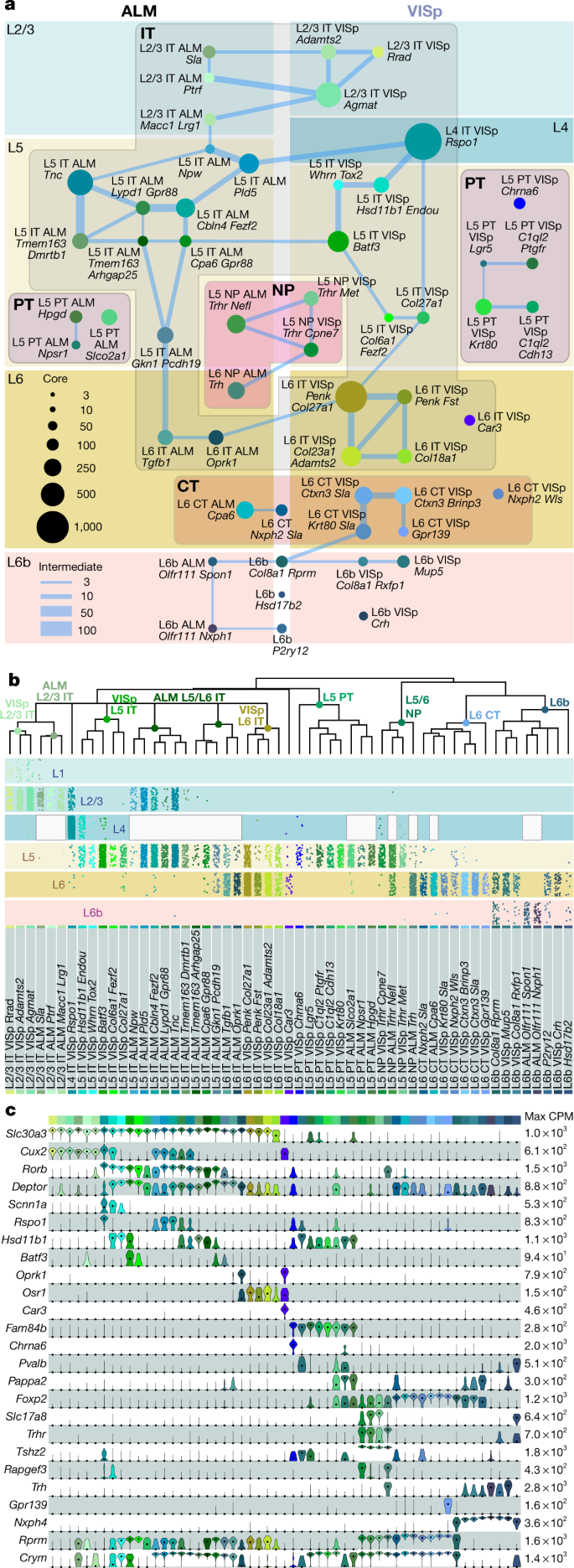 Shared and distinct transcriptomic cell types across