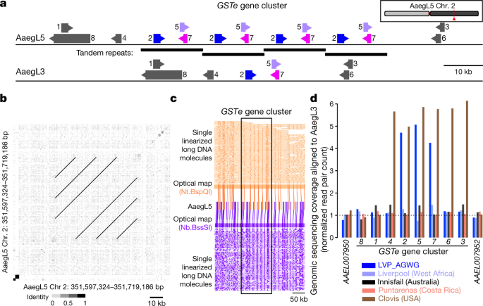 Improved reference genome of Aedes aegypti informs arbovirus vector