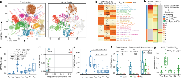 Lineage Tracking Reveals Dynamic Relationships Of T Cells In Colorectal Cancer Nature