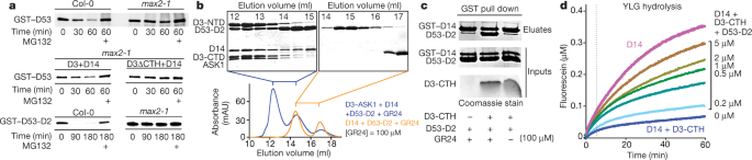 Structural plasticity of D3–D14 ubiquitin ligase in