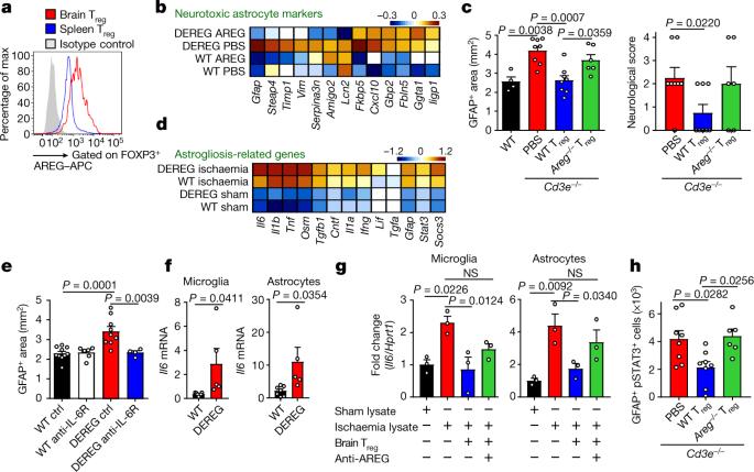 Brain regulatory T cells suppress astrogliosis and