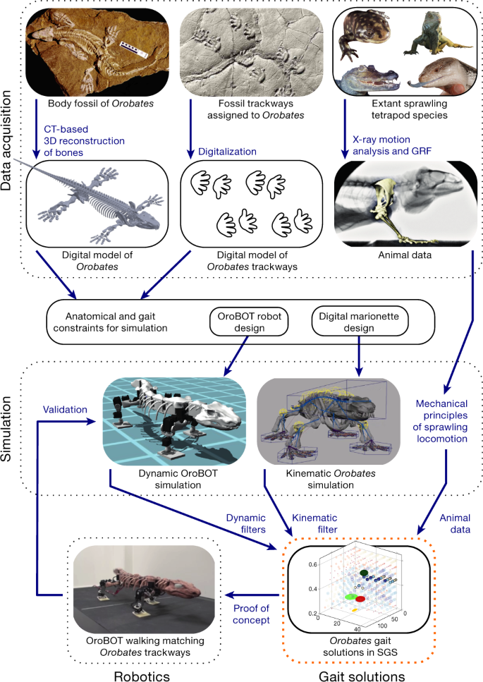 Reverse-engineering the locomotion of a stem amniote | Nature