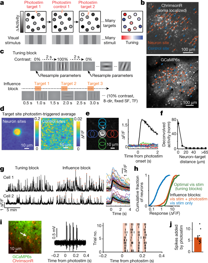 Single-neuron perturbations reveal feature-specific competition in