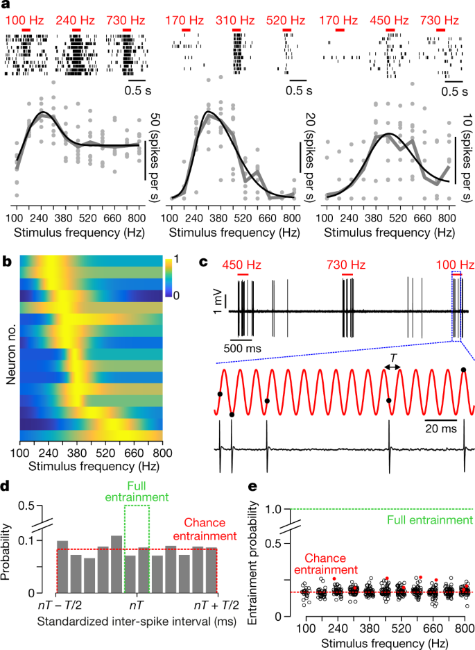 Feature-selective encoding of substrate vibrations in the forelimb
