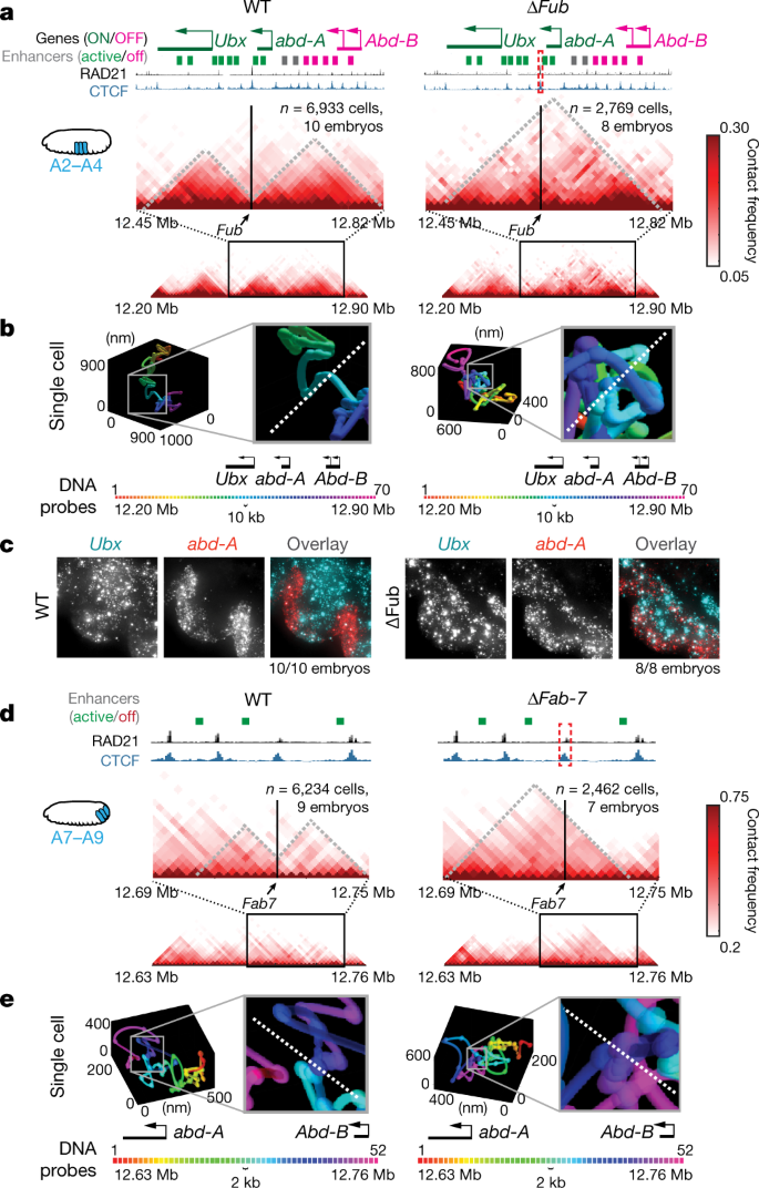 Visualizing DNA folding and RNA in embryos at single-cell