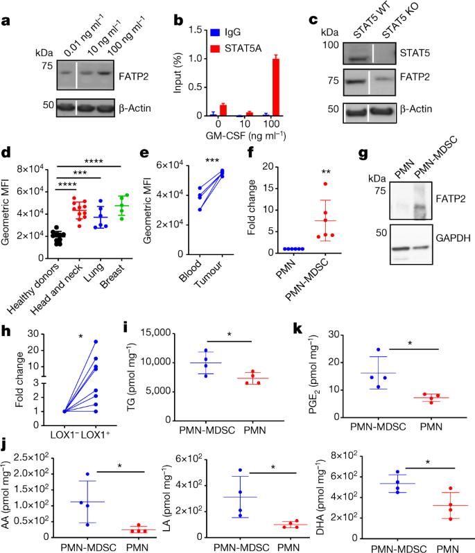 Fatty acid transport protein 2 reprograms neutrophils in
