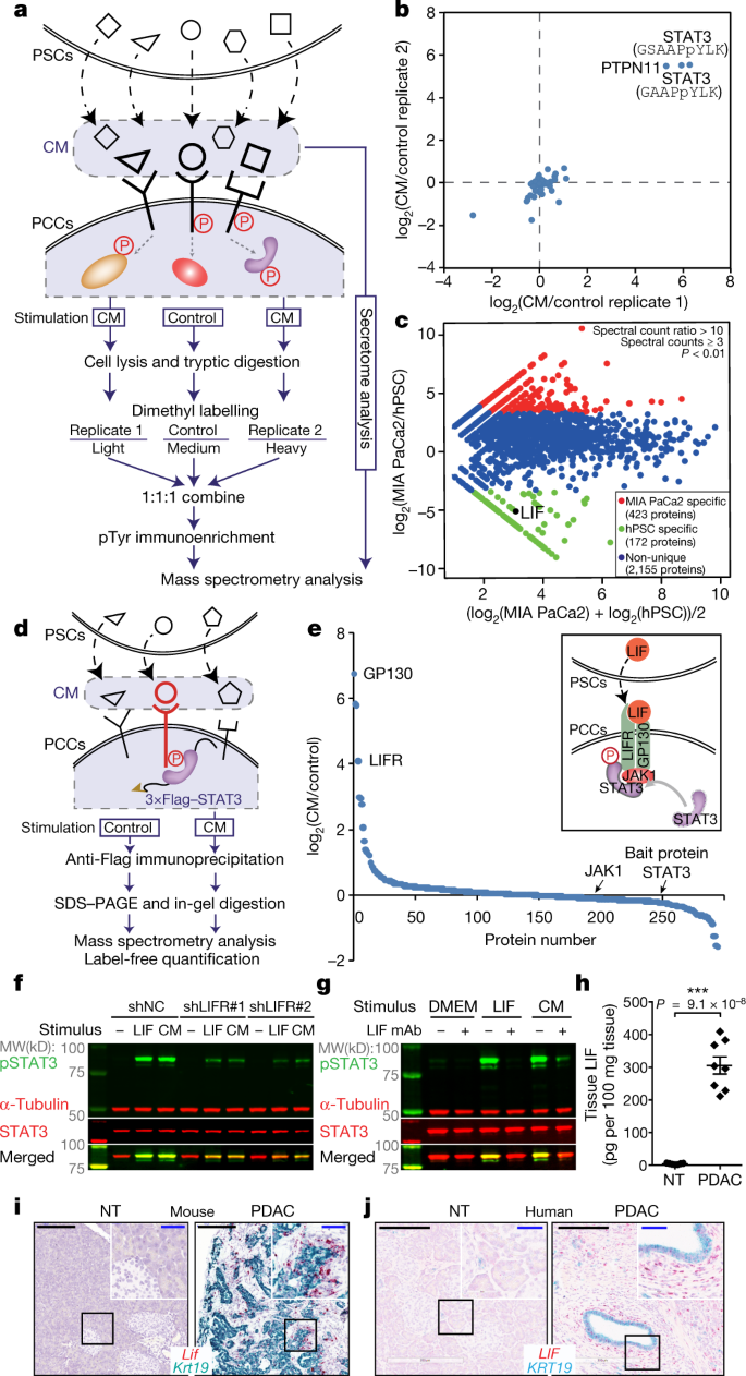 Targeting LIF-mediated paracrine interaction for pancreatic cancer