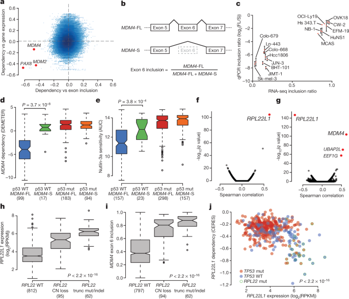 Next-generation characterization of the Cancer Cell Line