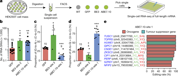 Off-target RNA mutation induced by DNA base editing and its