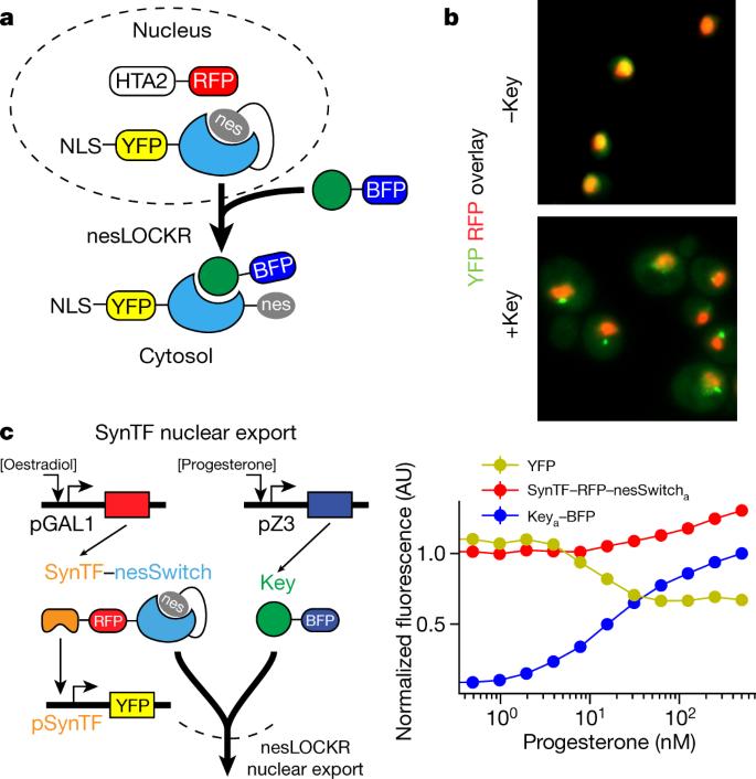 De novo design of bioactive protein switches   Nature