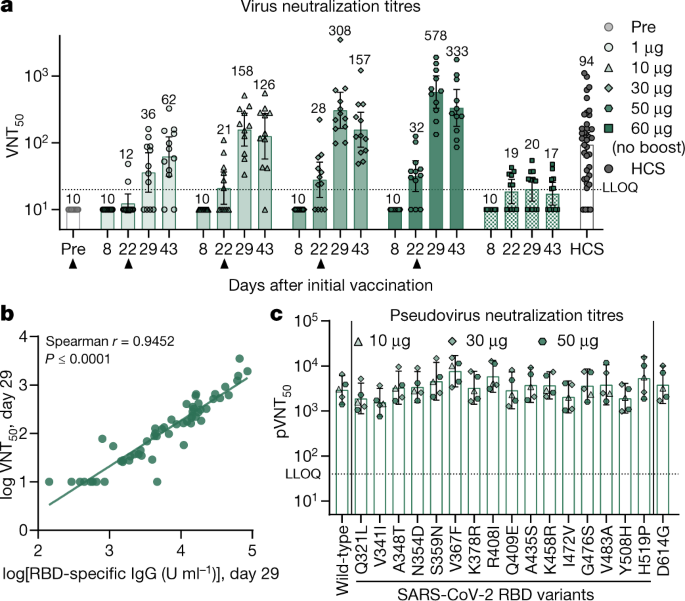 Covid 19 Vaccine Bnt162b1 Elicits Human Antibody And T H 1 T Cell Responses Nature
