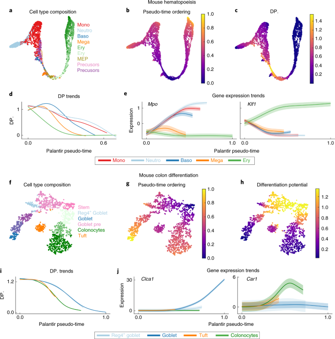 Characterization of cell fate probabilities in single-cell