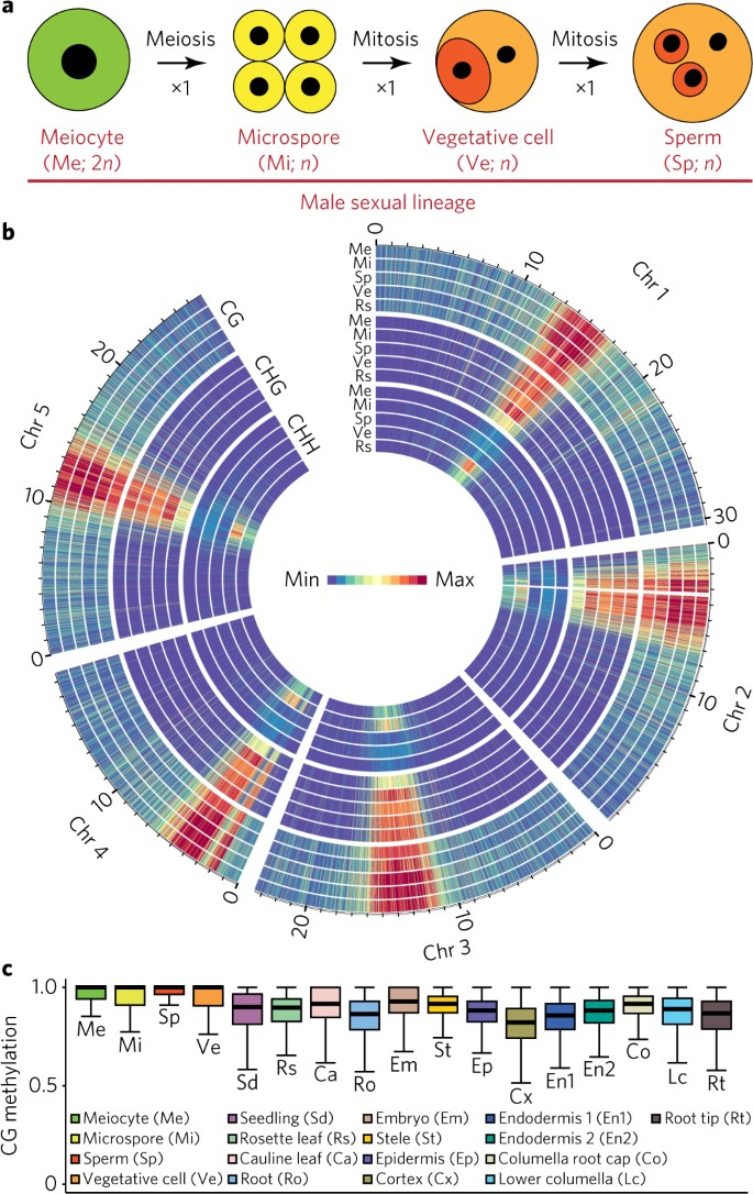 Sexual-lineage-specific DNA methylation regulates meiosis in