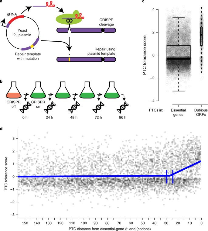 Highly parallel genome variant engineering with CRISPR–Cas9