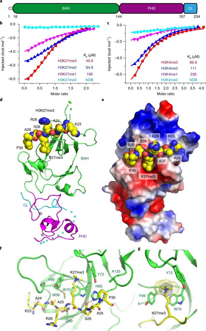 EBS is a bivalent histone reader that regulates floral phase