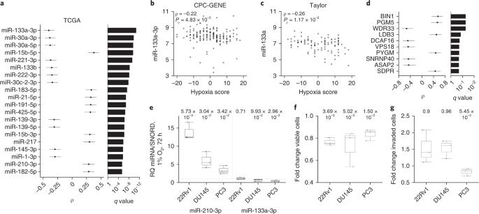 Molecular landmarks of tumor hypoxia across cancer types | Nature