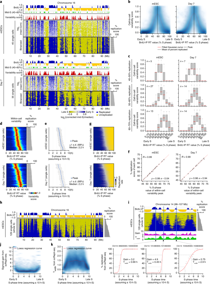 Genome-wide stability of the DNA replication program in