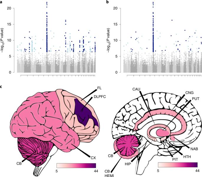 Gene expression imputation across multiple brain regions