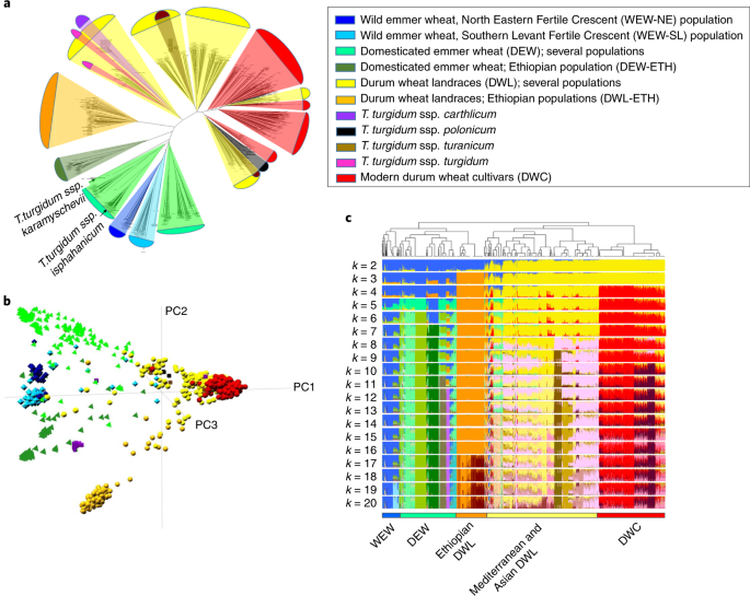 Durum wheat genome highlights past domestication signatures