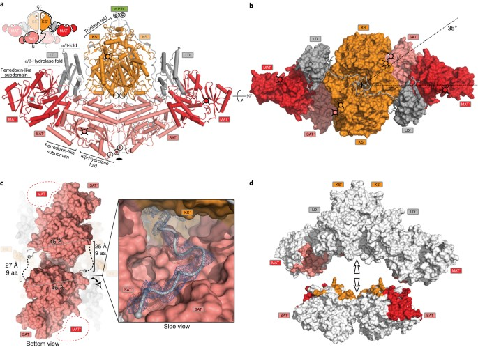 The structural organization of substrate loading in