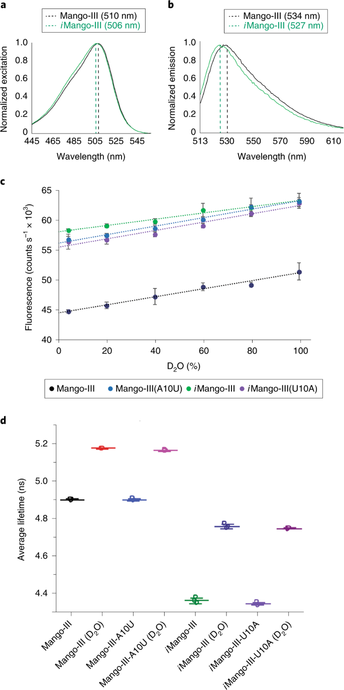 Structure and functional reselection of the Mango-III