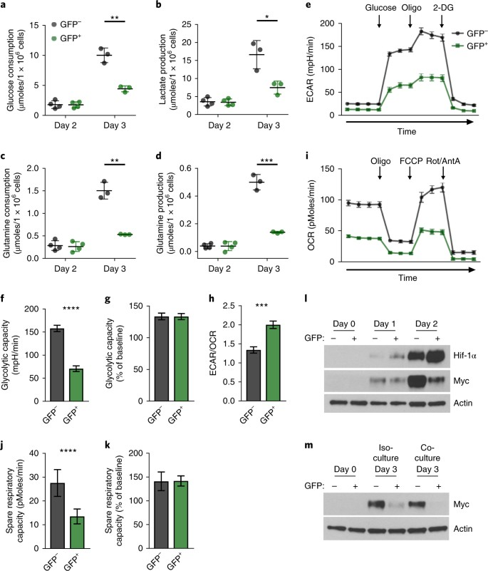 Maintenance of CD4 T cell fitness through regulation of