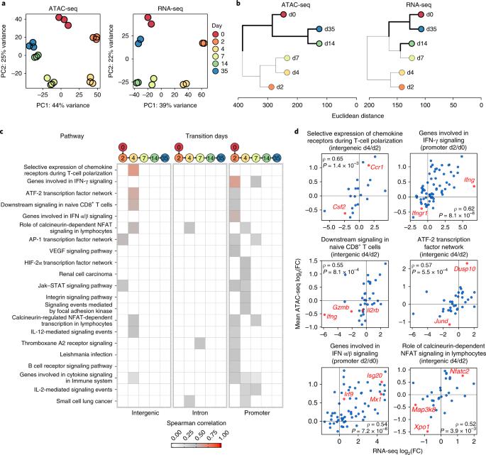 Epigenetic control of innate and adaptive immune memory   Nature