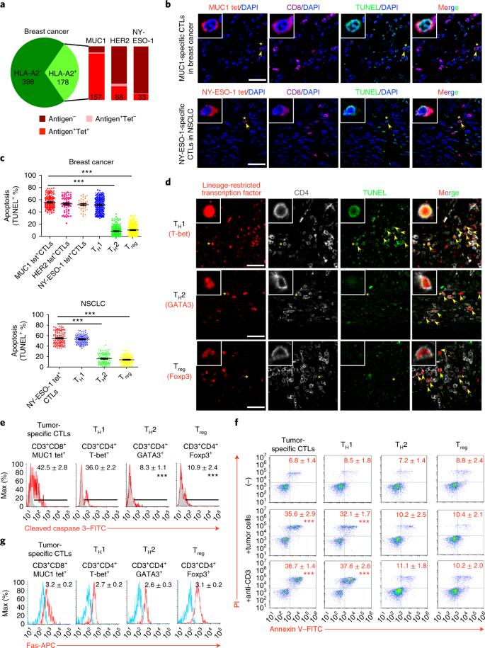 NKILA lncRNA promotes tumor immune evasion by sensitizing T
