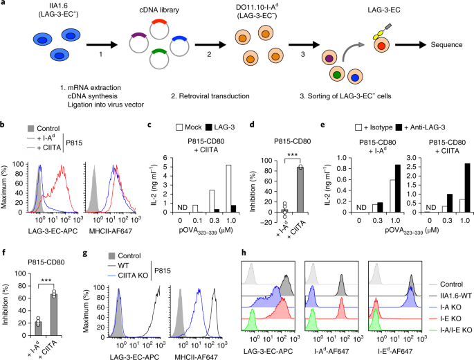 LAG-3 inhibits the activation of CD4 + T cells that