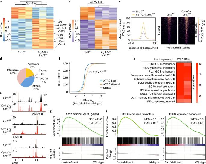 Histone demethylase LSD1 is required for germinal center