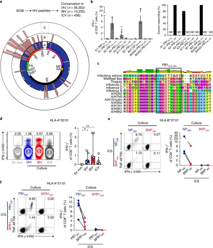 Human CD8 + T cell cross-reactivity across influenza A, B