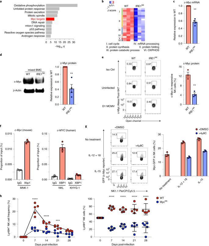The IRE1 endoplasmic reticulum stress sensor activates natural