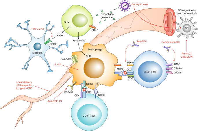Mechanisms of immunotherapy resistance: lessons from