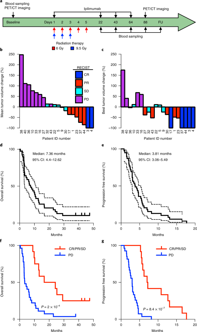 Radiotherapy induces responses of lung cancer to CTLA-4 blockade