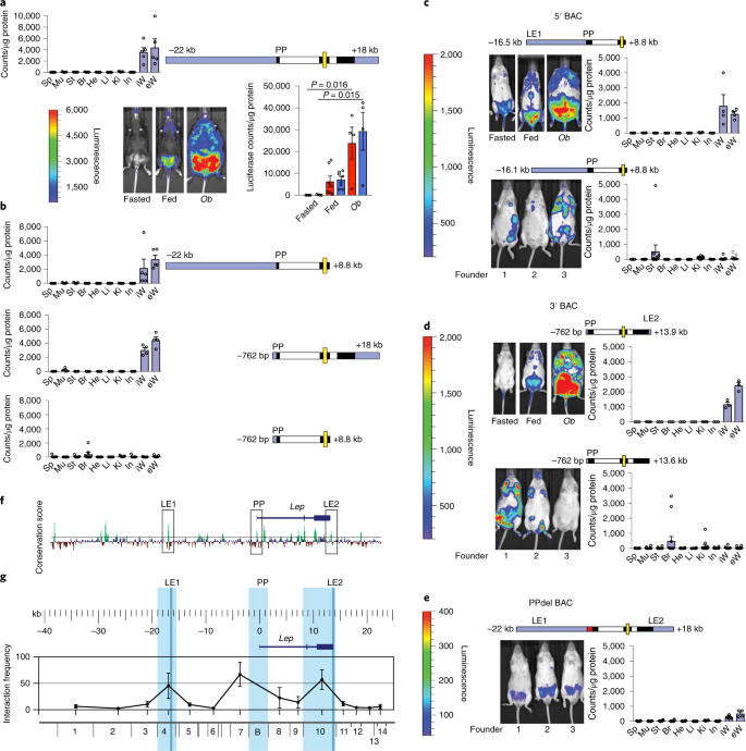 Dysregulation of a long noncoding RNA reduces leptin leading