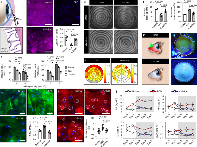 Multiscale reverse engineering of the human ocular surface   Nature