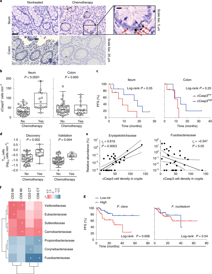Chemotherapy Induced Ileal Crypt Apoptosis And The Ileal Microbiome Shape Immunosurveillance And Prognosis Of Proximal Colon Cancer Nature Medicine